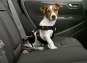 Предпазен нагръдник за куче – M. ID -0606625