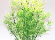 Растение Aquaplant Bamboo Giant 46см от Sydeco, Франция