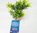 Растение Papirus Medium 15см от Sydeco, Франция