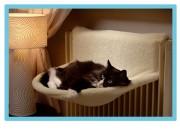Легло за парно Размери: 55x44cm. Артикул- CG002