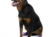 Pawz Large Purple – каучукова водоустойчива обувка за кучета с дължина на лапата до 10 см. 1 брой