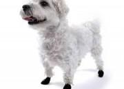 Pawz Tiny Black – каучукова водоустойчива обувка за кучета с дължина на лапата до 2.5 см. 1 брой