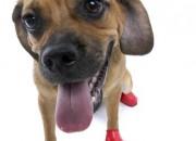 Pawz Small Red – каучукова водоустойчива обувка за кучета с дължина на лапата до 6 см. 1 брой