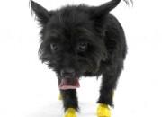 Pawz XXSmall Yellow – каучукова водоустойчива обувка за кучета с дължина налапата до 3 см. 1 брой