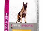 German Shepherd – 12кг.