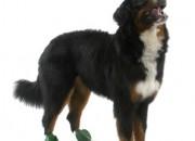 Pawz XLarge Green – каучукова водоустойчива обувка за кучета с дължина на лапата над 10 см. 1 брой