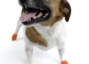 Pawz XSmall Orange – каучукова водоустойчива обувка за кучета с дължина на лапата до 5 см. 1 брой