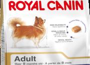 Chihuahua Adult –  Чихуахуа – Над 8 месечна възраст – 500 гр.