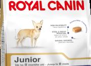 Chihuahua Junior – Чихуахуа – До 8 месечна възраст – 500 гр.