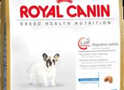 French Bulldog 30 Junior – Френски Булдози от 2 до 12 месеца – 3 kg