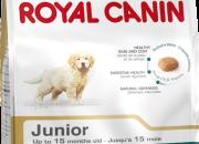 Golden Retriever Junior – Голдън Ретривъри до 15 месечна възраст – 3 кг.