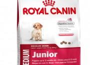Medium Junior – тегло в зряла възраст от 11 до 25 кг – До 12 месечна възраст – 4 кг.
