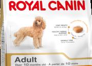 Poodle Adult – Пудели в зряла и напреднала възраст – Над 10 месечна възраст – 1.5 кг.