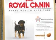 Rottweiler 31 Junior – Ротвайлер от 2 до 18 месеца – 12kg.