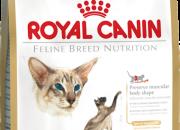 Siamese 38 –  Сиамски котки над 1 година – 10 kg.