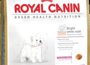 West Highland White Terrier 21 – бели Териери над 10 месеца – 3 kg.
