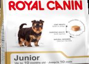 Yorkshire Terrier Junior – Йоркширски териер – До 10 месечна възраст – 500 гр.