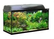Classic прав 80 напълно оборудван аквариум – 80x35x40 – 112л.
