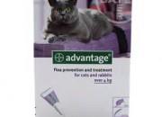 Advantage Спот-он за котки над 4кг – 4 пипети