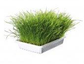 Трева за котки 100гр. в купичка – Артикул No:4232